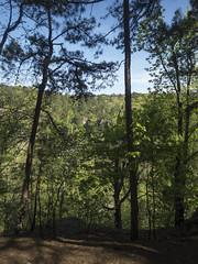 RED02525 (David J. Thomas) Tags: petitjeanstatepark morrilton arkansas hiking caving bedrock forests trees rocks streams creeks waterfalls cedarcreek rockhousecave asgcsymposium