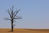 The old tree (Xtraphoto) Tags: braun brown landschaft landscape alt old baum tree