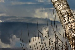 dark clouds reflected (EllaH52) Tags: tree birch clouds dark riverside reflections branches