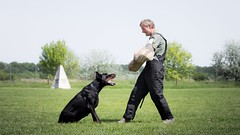 Standoff (zola.kovacsh) Tags: outdoor animal pet dog ipo schutzhund dobermann doberman pinscher