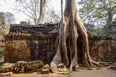 Angkor Thom (Steph.Blandino) Tags: cambodia cambodge tdm travel tourdumonde worldtour voyage siemreap angkor temple followme passport