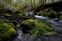 Moss (20EURO) Tags: moss water nature landscape green stream valley swamp river mountain spring grass