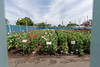 柵の中の花園