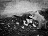 3848 - Game (Diego Rosato) Tags: game gioco play gatto cat gattino kitten bianconero blackwhite fuji x30 rawtherapee animale animal pet