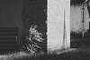 e-lias-2914 (e-lias hun) Tags: blackandwhite urban city street jupiter 37a m42 vintagelens nikon d7000 elias hungary karcag shadow highlights lights
