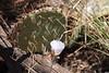 DSC_0050 (LauraLizzie) Tags: 387 april2018 arizona