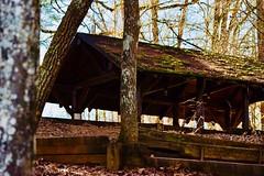 The Woods . . . . .  #landscape_lovers #sky_captures #landscapephotography #fantastic_earth #landscape_captures #ic_landscapes #ig_exquisite #nature_wizards  #mexigers #primerolacomunidad #nikonphotography #nikontop (EmmAlvrz) Tags: landscapelovers skycaptures landscapephotography fantasticearth landscapecaptures iclandscapes igexquisite naturewizards mexigers primerolacomunidad nikonphotography nikontop