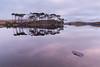 Pine Island (explored) (Hibernia Landscapes (sjwallace9)) Tags: ireland galway reflections trees sunrise