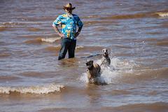 170731 Hunstanton-0109 (whitbywoof) Tags: sea beach splash rescue pet dog lurcher sheena rupert brindle