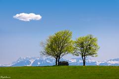 Lonely Cloud (StephAnna :-)) Tags: alpen berge bäume chamblon frühling landschaft printemps wolken alpes arbres cloud clouds gazon grass green grün herbe montagne mountains nuages spring trees vert vaud schweiz ch