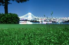 Lie on the grass (sapphire_rouge) Tags: odaiba 東京 お台場 japan tokyo レインボーブリッジ 湾岸 rainbowbridge seaside