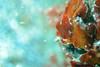 20180422-DSC_0239.jpg (d3_plus) Tags: d700 drive fish port apnea closeuplens fishingport 景色 ニコン1 watersports sky マリンスポーツ ニコン nikon 素潜り ウォータープルーフケース nikon1j4 漁港 海 nikond700 地形 scenery 息こらえ潜水 ズーム nikon1 waterproofcase landscape nature izu sea 185mmf18 自然 skindiving wpn3 inonucl165m67 japan 50mmf18 50mm dailyphoto nikonwpn3 macrolens 水中 クローズアップレンズ nikkor daily スキンダイビング イノン マクロ ucl165m67 inon snorkeling marinesports macro 風景 diving 185mm zoomlense 1nikkor185mmf18 eastizu j4 空 日本 東伊豆 underwater シュノーケリング 魚