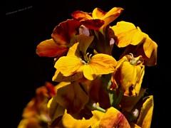 Plant / Pflanze/ Növény (A. Meli) Tags: növény plant plantae pflanze tavasz frühling spring