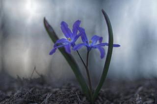 Un peu de printemps