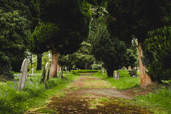Caversham Cemetery (Steven's Photo's) Tags: caversham cemetery berkshire reading overgrown trees bluebells moss nature old stevenplows hidden history olympus epl3 naturereserve urban