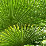 Geometrie Vegetali - (guardare in Large premere L) thumbnail