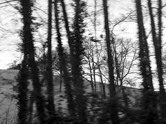 Forest by@isabelruizperdiguero