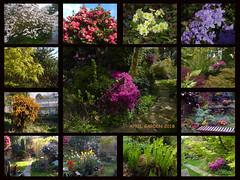 April Garden 2018 (Durley Beachbum) Tags: april bournemouth garden flowers shrubs