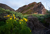 Flowers & Pt. Mugu Rock (JohnLazo19) Tags: 1635mm beach canon5dmarkiv evening ocean pch ptmugu sunset