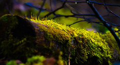 Is this the way to Mordor (evakongshavn) Tags: trunk mordor forest moss mossyforest dark light green tree trees wald outdoors outsidepictures natur nature naturphotography naturephotography naturaleza naturbilder naturescape havingfun macro macroshot closeup makro