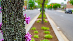 2018.05.06 Vermont Avenue, NW Garden - Work Party, Washington, DC USA 01887