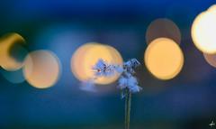 feel the wind (Theocharis Kalamaras) Tags: wind greece skotina flower lights night pieria hellas