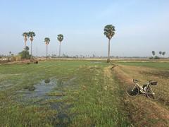 Cambodia, Kampong Speu Province, Kong Pisei District, Preah Nipean Commune, Krang Chek (Die Welt, wie ich sie vorfand) Tags: cambodia bicycle cycling កម្ពុជា ខេត្តកំពង់ស្ kampongspeu kampongspeuprovince kocmo singlespeed kongpiseidistrict kongpisei preahnipean krangchek sugarpalm swamp swampland