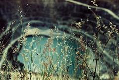 .when life sank down for a moment. (Camila Guerreiro) Tags: film expiredfilm fuji superia 100 grain flowers lake brazil leica analog expired camilaguerreiro leicar4