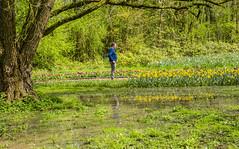 Reflections. (ost_jean) Tags: reflections nikon d5300 tamron sp af 1750mm f28 xr ostjean flowers bloemen fleurs spiegeling floraliabrussels belgium belgique belgie belgica