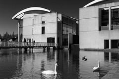 Ráðhús (trochford) Tags: ráðhús radhus cityhall building modern architecture tjörnin water pond lake swans footbridge reykjavik capitalregion iceland íslands is bw bnw blackandwhite blackwhite noiretblanc blancoynegro mono monochrome canon canon6d ef24105mmf4lisusm ef24105