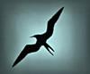 Silhouette of bird on Galapagos Island (jillrowlandwv) Tags: bird birds galapagos ecuador tourism tourist travel colorful blue yellow wildlife outdoors adventure