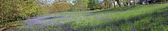 The Lye (Cornishcarolin. Stupid busy!! xx) Tags: cornwall penryn httpwwwenysgardensorguk bluebells plants flowers nature landscapes 1001nights 1001nightsmagiccity 1001nightsmagicwindow