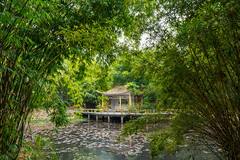 Pavilion on the Pond (Guangzhou, China. Gustavo Thomas © 2018) (Gustavo Thomas) Tags: chinese pavilion pond nature natura naturaleza beauty clam tranquility guangzhou botanicalgarden green water aqua agua eaux life beauté china