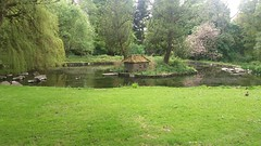 Duck Pond, Camperdown Country Park, Dundee (ianburgess129) Tags: duck pond camperdown country park dundee
