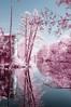 20180421-FD-flickr-0036.jpg (esbol) Tags: ir infrared infrarot nir