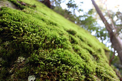 bigsouthfork_3801 (jcbonbon) Tags: big south fork park tennessee spring april moss