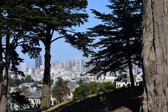 "San Francisco, California, US August 2017 255 (tango-) Tags: sanfrancisco frisco california us usa unitedstates america westernamerica west ovest америка соединенныештаты сша 美國""美國""美國 amerika vereinigtestaaten アメリカ 米国米国 соединенные штатысша statiuniti western"