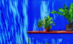 Pared color azul indio (FOTOS PARA PASAR EL RATO) Tags: plantas fridakahlo museo texturas pared azul