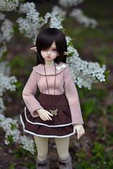 BJD meeting 29.04 (8) (hoe-nir) Tags: dimdoll flowne bjd doll