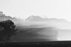 Misty Morning (esfishdoc) Tags: explore inexplore