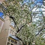 Spring at Home thumbnail