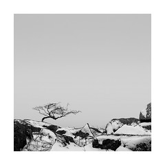 Resilience (Nick green2012) Tags: tree silence snow dartmoor square blackandwhite landscape