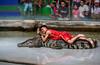 Sriracha_KMITL_day2_16 (plynoi) Tags: chonburi siracha sriracha srirachatigerzoo thailand zoo crocodile traveldestination travel animal
