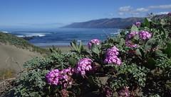 Coast spring (Jeff Goddard 32) Tags: californiacoast sanluisobispocounty pointsierranevada wildflowers springtime