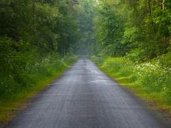 Mein Radweg nach Celle (W@llus2010) Tags: celle dunst tz61
