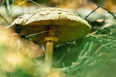 (a└3 X) Tags: natur nature alexander olympus outdoor color makro macro macrofotografie mushroom pilze fungi wildlife alexfenzl a└3x