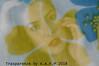 TRASPARENZE (ADRIANO ART FOR PASSION) Tags: ritratto portrait doppiaesposizione esposizionemultipla duobleexposure nikon nikond90 nikkor18200 fotostudio trasparenze transparencies 32mm adrianoartforpassion adriano esperimenti