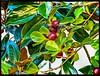 AutumnLeavesEtc (Peter_Gallagher) Tags: bracketing garden