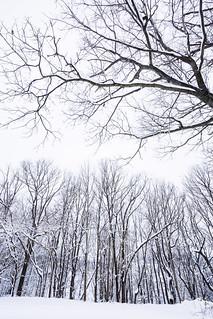 Maryland Winter [03.21.18]