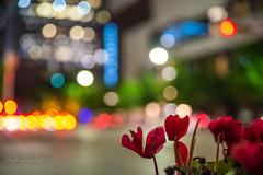 Flower, Lights, and Bokeh (Hog Callin Foto) Tags: bokeh flowers lights atx austin texas city congress tamron sigma nikon d750 dslr fx full frame